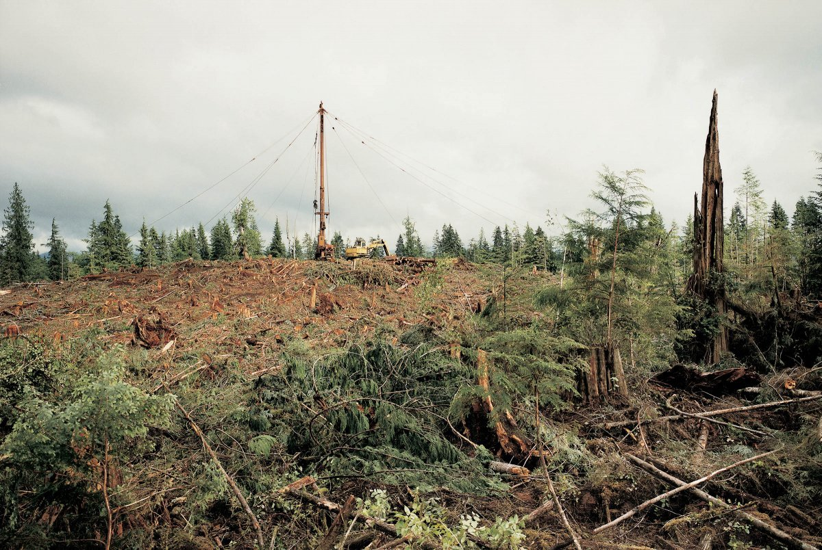 Logging Yarder, Old Growth Forest, Hoh Valley National Forest, Washington 1990