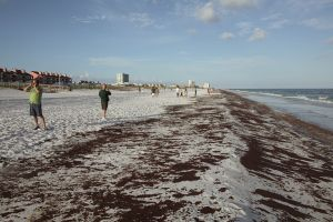Oil Spill Bystanders on cell phones, Pensacola Beach, Florida, 2010