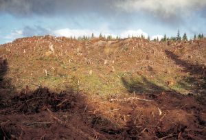 Clear Cut in the Hoh Valley, Olympic National Forest, Washington 1997