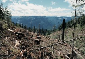 Site of a Federal Timber Sale, Willamette National Forest, Oregon 1997